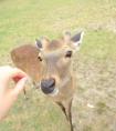 不一样的奈良——来一场美味养眼的发现之旅吧